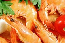Free Shrimp 004 Bis Stock Photography - 16429772