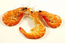 Free Shrimp 006 Bis Stock Photo - 16429850
