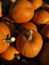 Free Assortment Of Pumpkins Royalty Free Stock Images - 16430839