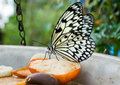 Free Tree Nymph Butterfly Royalty Free Stock Images - 16437249