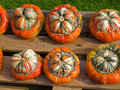 Free Colorful Pumpkins For Halloween Scary Jack Stock Images - 16439814