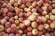 Free Yellow-Red Apples Royalty Free Stock Photography - 16430337