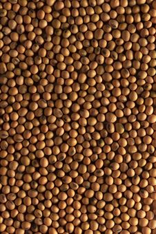 Free Beans Royalty Free Stock Image - 16431136