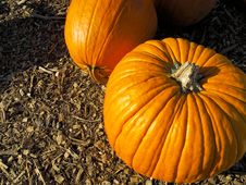 Free Pumpkins Stock Photo - 16431440