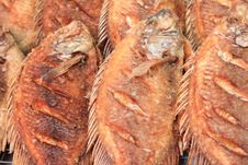 Free Grilled Fish Royalty Free Stock Photos - 16433418