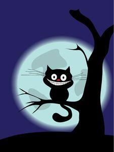 Free Cat Stock Image - 16433541