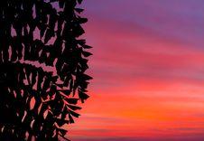 Free Sunset Background Royalty Free Stock Photo - 16434825