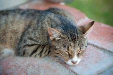 Free Sleepy Cat On The Stairs Stock Photography - 16434912