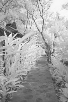Free Infrared Water-distribution Canal Royalty Free Stock Photos - 16434938