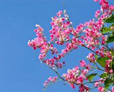 Colorful Pink Flower With Blue Sky Stock Photos