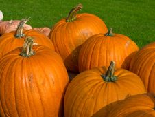 Free Colorful Pumpkins For Halloween Scary Jack Royalty Free Stock Photography - 16439787