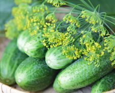 Free Cucumbers And Dill Royalty Free Stock Photography - 16439947