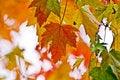 Free Autumn Foliage Stock Photo - 16447710