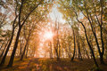Free Autumn Sun In The Trees Royalty Free Stock Image - 16448456