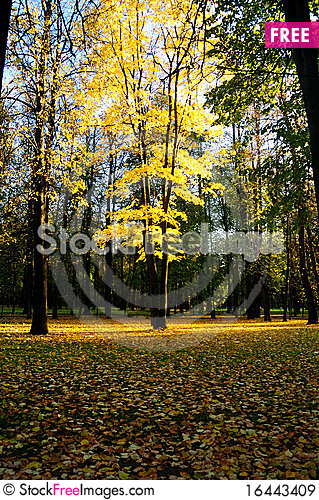Autumn-4 Stock Photo