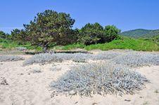 Free Coastline Flora Stock Photo - 16440030