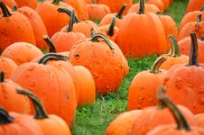 Warted Pumpkins Royalty Free Stock Photos