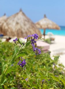 Free Tropical Flowers And Beach Stock Image - 16442241