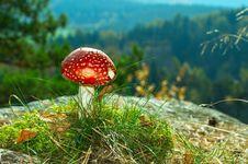 Free Mushroom Stock Photos - 16442263