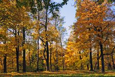 Free Autumn Park Stock Photography - 16442962