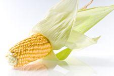 Free Corncob Stock Image - 16443201
