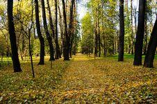 Free Autumn-2 Stock Photography - 16443312