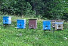 Color Wooden Bee Hives Stock Images