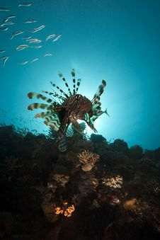 Free Lionfish And Ocean Royalty Free Stock Photography - 16443677
