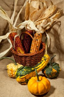 Pumpkin And Corn Stock Images