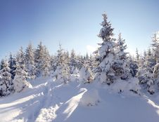Free Winter In Mountains Royalty Free Stock Photography - 16443737