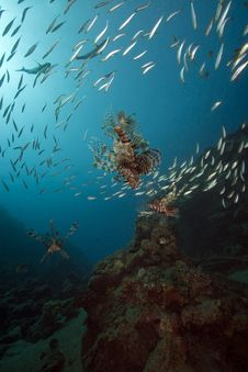 Free Lionfish And Ocean Stock Photos - 16443753