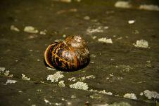 Free Gorgeous Garden Snail Shell Royalty Free Stock Photo - 16443865