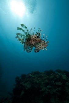 Free Lionfish And Ocean Royalty Free Stock Image - 16443906
