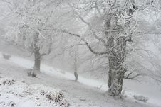 Free Winter Trees Royalty Free Stock Image - 16444046