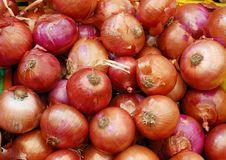 Free Close Up Of Onion Stock Image - 16444291
