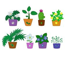 Free Pot Flowers Royalty Free Stock Photos - 16444298