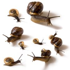 Free Snails On White Background Royalty Free Stock Photos - 16445768