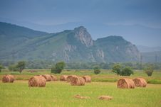 Free Haystacks On A Green Field Royalty Free Stock Photo - 16447085