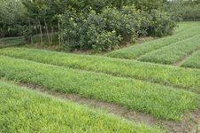 Free Greensward Stock Image - 16447451
