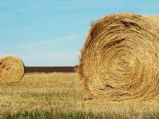 Free Round Hay Bales Royalty Free Stock Images - 16447569