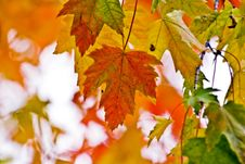 Free Autumn Foliage Stock Photo - 16447710