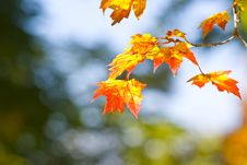 Free Autumn Foliage Royalty Free Stock Image - 16447886