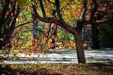 Free Autumn Paints Stock Image - 16448571