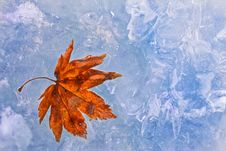 Free Purple Autumn Foliage On Ice Stock Photos - 16448653