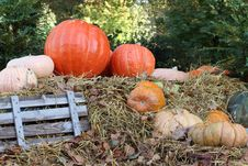 Free Pumpkins Royalty Free Stock Photography - 16449387