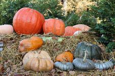 Free Pumpkins Royalty Free Stock Photo - 16449485