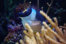 Free Ocean Life Stock Image - 16449721