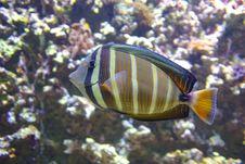 Free Ocean Life Stock Photo - 16449740