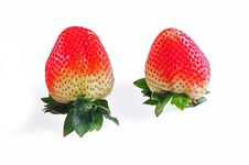 Red Strawberry Fruit Stock Photography