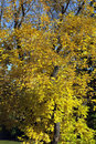 Free Colorful Autumn Tree Stock Photo - 16452450